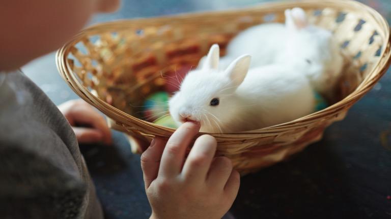 rabbit's lifespan